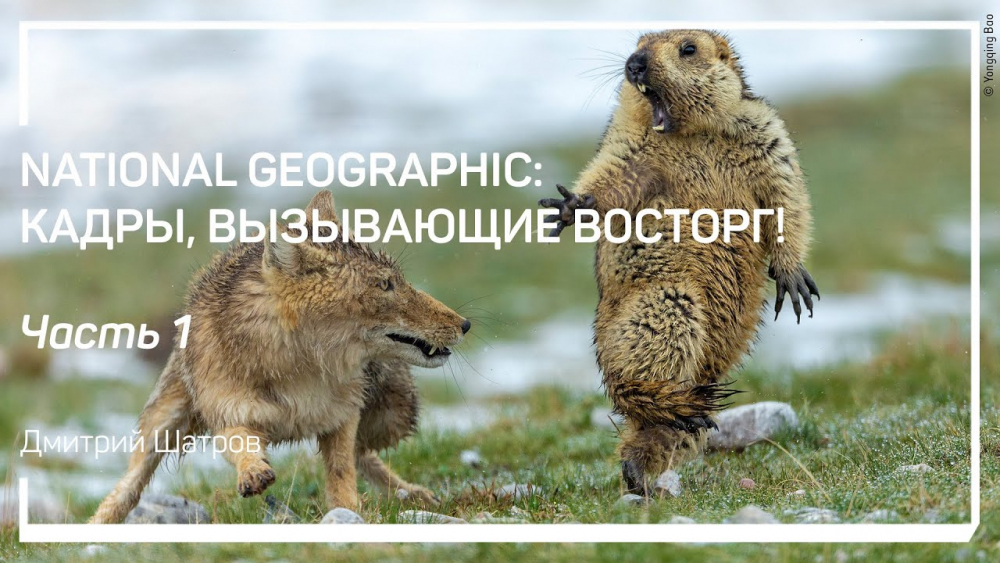 Покой и движение. National Geographic: кадры, вызывающие восторг! Дмитрий Шатров