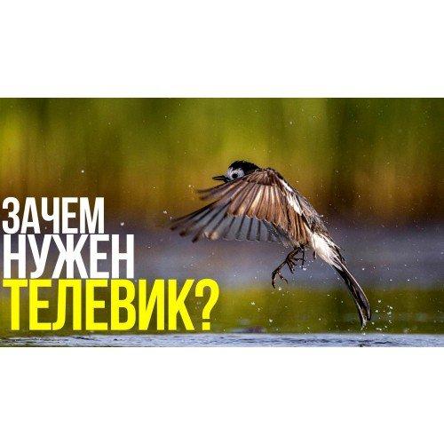 Как снимать птиц?   Фотосъёмка на природе с Canon RF 600mm F11 IS STM